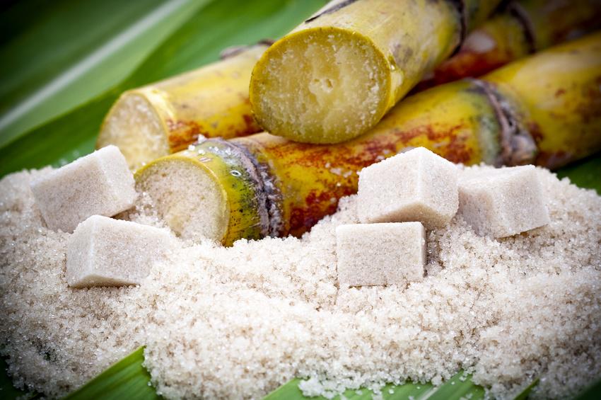 Zuckerrohr als Basis für Rum